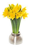 Fresh spring narcissus flowers in a vase Royalty Free Stock Image
