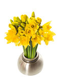 Fresh spring narcissus flowers in a vase Stock Images