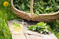 Fresh spring nettle. Suitable for salad, tea or use in cosmetics. Tea from nettle. Fresh spring nettle. Suitable for salad, tea or use in cosmetics stock photos