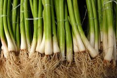 Fresh Spring Onion Stock Images