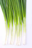 Fresh spring onion. On white background Royalty Free Stock Photography