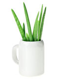 Fresh spring onion bunch in small ceramic noggin Stock Photo
