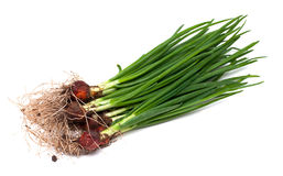 Fresh spring onion Royalty Free Stock Photography
