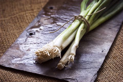 Fresh spring onions Royalty Free Stock Image