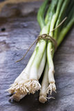 Fresh spring onions Stock Photos