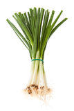 Fresh spring onions Stock Image