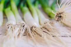 Scallions. Fresh spring onions also known as scallions on dark background Stock Photography