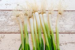 Scallions. Fresh spring onions also known as scallions on dark background Royalty Free Stock Photography