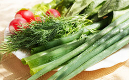 Fresh spring onions, dill and garden radish Royalty Free Stock Images