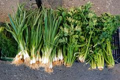 Fresh Spring Onions Royalty Free Stock Images