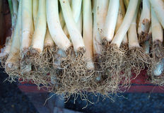 Fresh spring onions Royalty Free Stock Photos