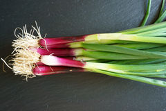 Fresh Spring Onions on a platte Royalty Free Stock Photo