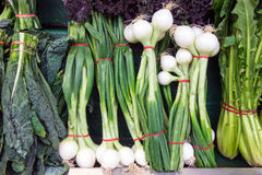 Fresh Spring Onions For Sale in Shop Royalty Free Stock Photos