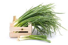 Fresh spring onions in wooden crate Stock Photography