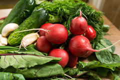 Fresh spring organic vegetables. Radishes, chard, dill, cucumber, cloves of garlic Royalty Free Stock Photos
