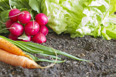 Fresh spring organic vegetables on the soil in the garden Stock Photos