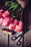 Fresh spring pink tulips Royalty Free Stock Images