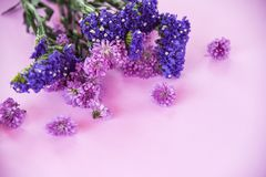 Fresh spring purple flower Marguerite and statice flowers frame composition plant on purple soft pink stock photo