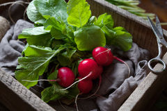 Fresh spring radish roots bunch natural vegetables in rustic style Royalty Free Stock Photography