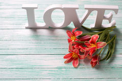 Fresh spring  red  flowers and word love on turquoise wooden bac Royalty Free Stock Photos