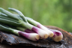 Fresh spring red onions Royalty Free Stock Images