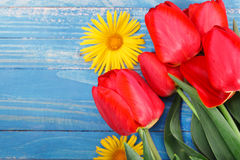 Fresh spring red tulips flowers on blue painted wooden planks. Royalty Free Stock Photography