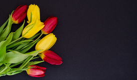 Fresh spring red and yellow tulip bouquet flowers closeup macro  in the lower left corner on black background top view w Stock Images