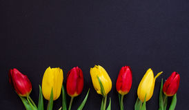 Fresh spring red and yellow tulip flowers closeup macro  on black background top view Stock Photography