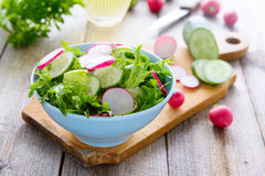 Fresh spring salad from cucumbers and radish Stock Images