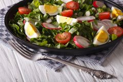 Fresh spring salad with eggs, tomato, radish and herbs Stock Photography