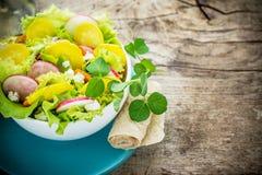 Fresh spring salad radish Stock Photography