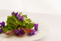 Fresh spring salad salad. Fresh spring salad with violets and primula Stock Photos