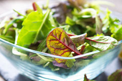 Fresh spring salad Stock Photography