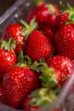Fresh spring strawberry, organic berries from farm. Fresh spring strawberry, organic berries close-up royalty free stock photo