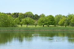 Fresh spring trees growing near a pond Stock Image