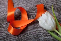 Fresh spring tulip close up with orange ribbon on old gray woode Stock Image