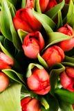 Fresh spring tulip flowers Royalty Free Stock Photos