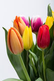 Fresh spring tulip flowers. Colorful bouquet of fresh spring tulip flowers Royalty Free Stock Photo