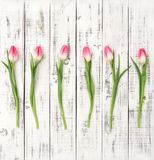 Fresh spring tulip flowers Floral flat lay Bouquet Royalty Free Stock Images