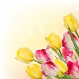 Fresh spring tulip flowers on orange. EPS 10 Royalty Free Stock Photo