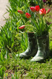 Fresh spring tulips flowers in boots vase Royalty Free Stock Photos