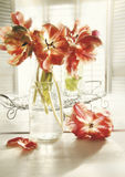 Fresh spring tulips in old milk bottle Royalty Free Stock Image