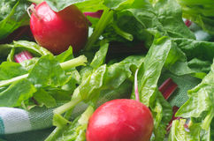 Fresh spring vegetables. Closeup to fresh spring vegetables Royalty Free Stock Images