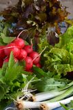 Fresh spring vegetables and edible wild herbs: radish, green and purple lettuce, onions, arugula, nettle, dandelion. Preparation f. Fresh spring vegetables and royalty free stock photography