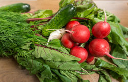 Fresh spring vegetables. Fresh spring organic vegetables - radishes, chard, dill, cucumber, clove of garlic Stock Photography