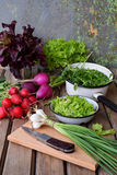Fresh spring vegetables: radish, green and purple lettuce, onions, arugula on a wooden background. Preparation of food, salad. Hea. Lthy food Stock Images