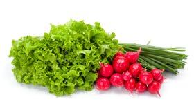 Fresh spring vegetables: radish, scallion and lettuce Royalty Free Stock Images