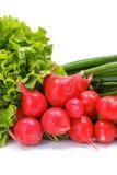 Fresh spring vegetables: radish, scallion and lettuce Stock Photography