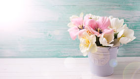 Fresh  spring white and pink  tulips and narcissus in white buck Stock Photos
