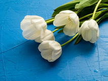 Fresh spring white tulips over blue Stock Images
